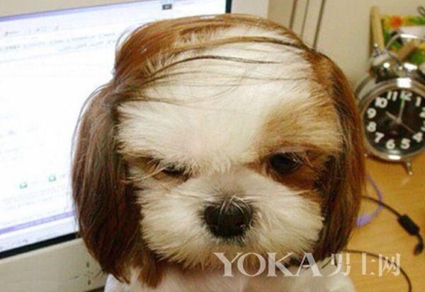 总在掉头发?是不是护发产品该换啦?